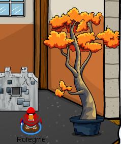 ROCKHOPPERtree